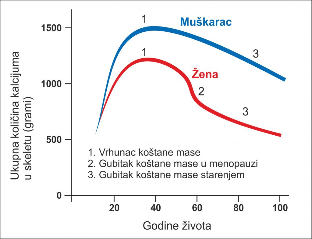 K2D3 Chart Osteoporoza